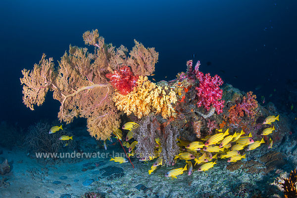 Similan Underwater photography
