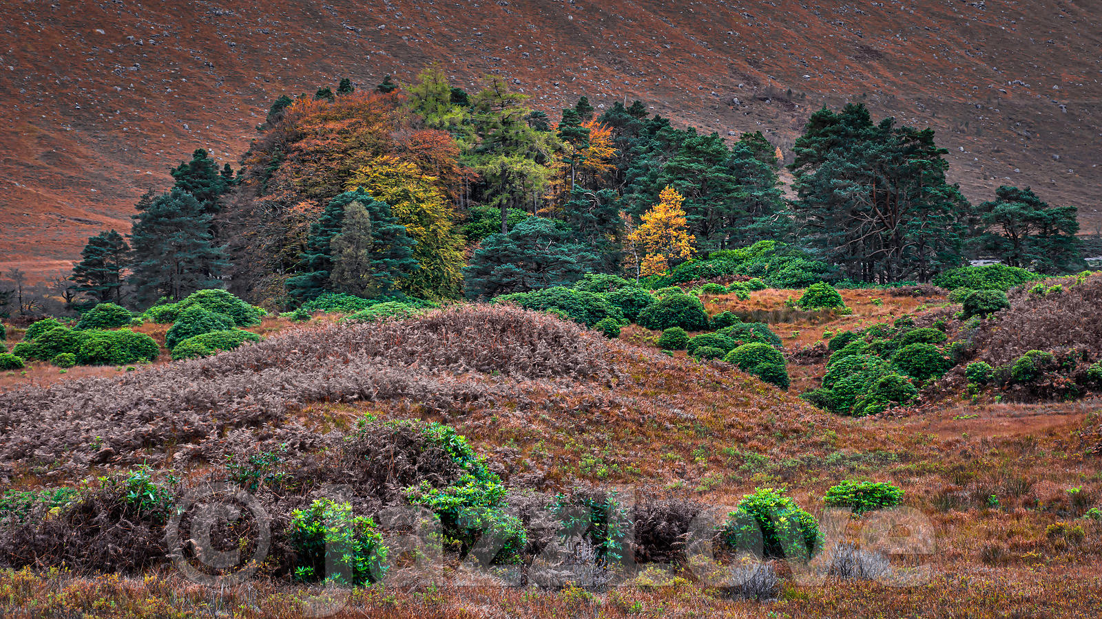 Autumn in Scottish Highlands