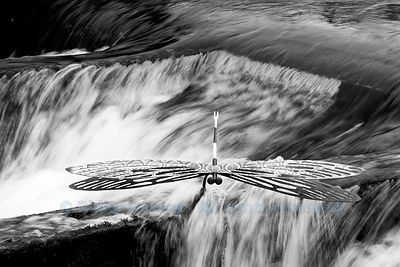 Dragonfly sculpture in the Sorgue river in L'Isle-sur-la-Sorgue