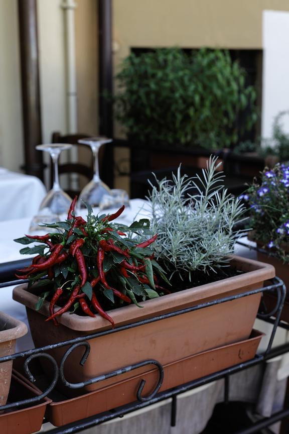 "Rosemary and chili peppers in front of Tavern ""Osteria al Torcol"" in Sirmione's old town."