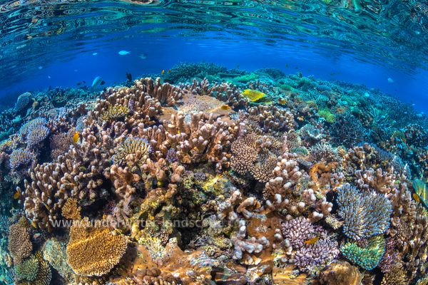 North Reef Coral Garden