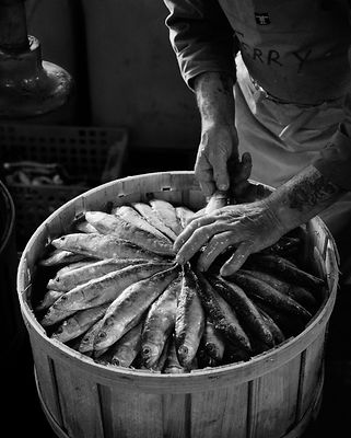 Preserved, salted sardines are packed into wooden casks. The Pilchard Works, Newlyn, Cornwall, England.