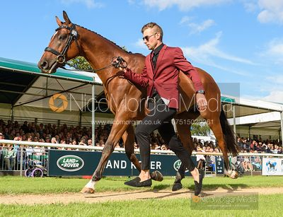 Chris Talley and UNMARKED BILLS at the trot up, Land Rover Burghley Horse Trials 2019