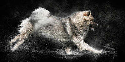 Art-Digital-Alain-Thimmesch-Chien-949
