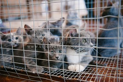 A crate full of grey rescue kittens