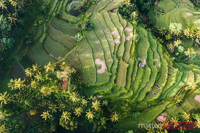 Aerial overhead of rice paddies, Sidemen valley, Bali