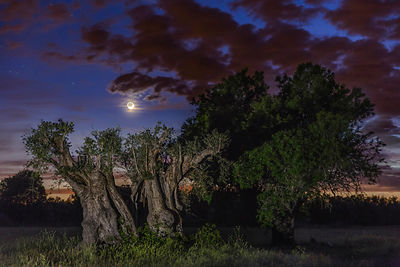 Lunar Earthshine and the ancient olive tree