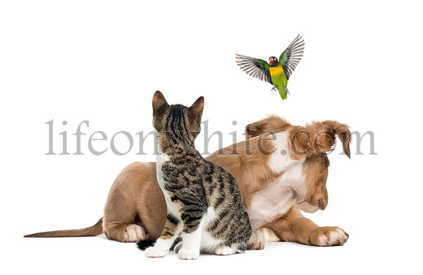 Cat, dog and bird, isloated on white