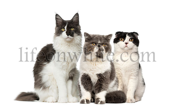 Group of cats isolated on white