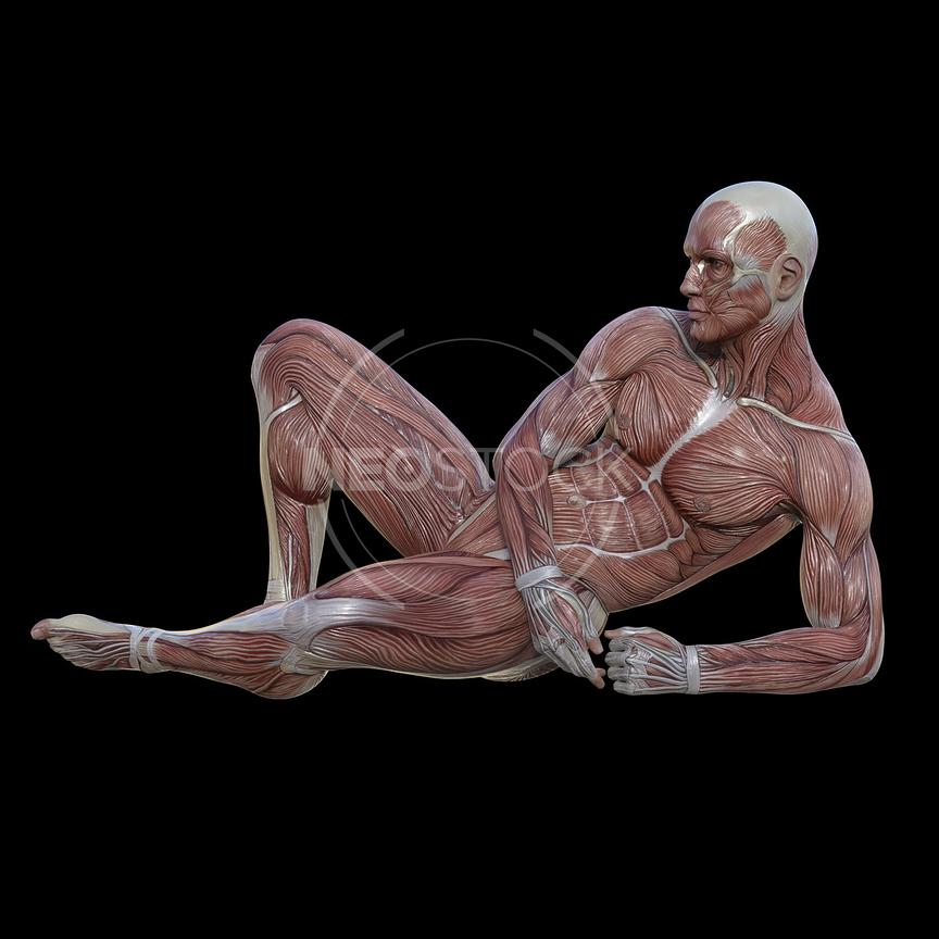 cg-body-pack-male-muscle-map-neostock-22