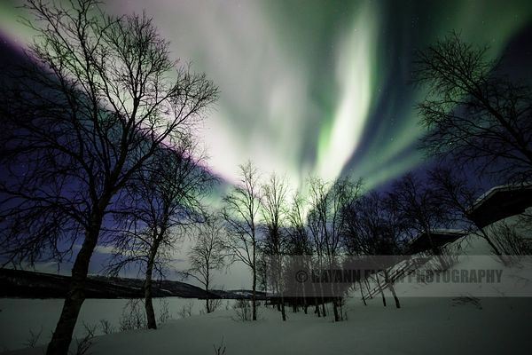 Aurora Borealis on top of cottages on the bank of the Teno River in Lapland