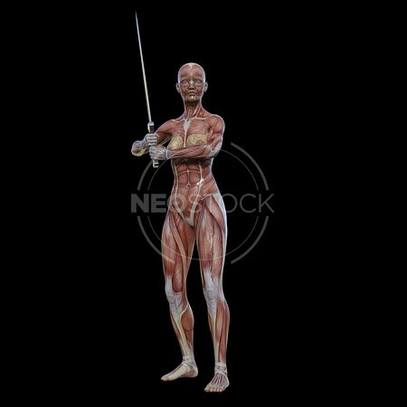cg-body-pack-female-muscle-map-neostock-12