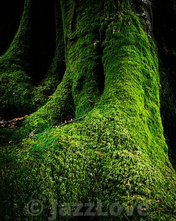Mossy tree trunk in lush woodland.