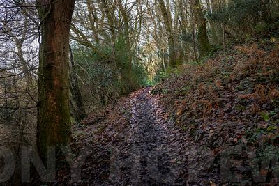 small_Holloways_and_Tramways-1000835
