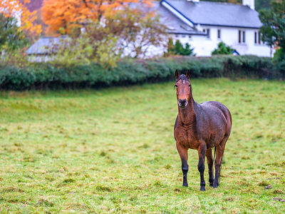Horse in a field, Lake district, Cumbria