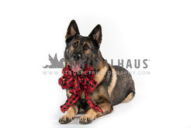 German Shepherd wearing large red and black checked bow