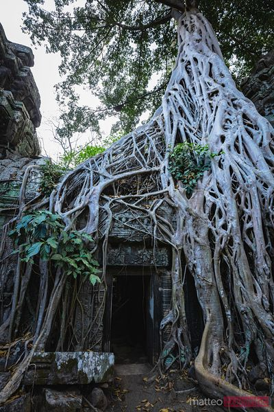 Ta Prohm temple in the forest, Angkor Wat, Cambodia