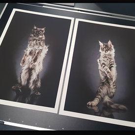 STANDING CATS - FINE ART LIMITED EDITION