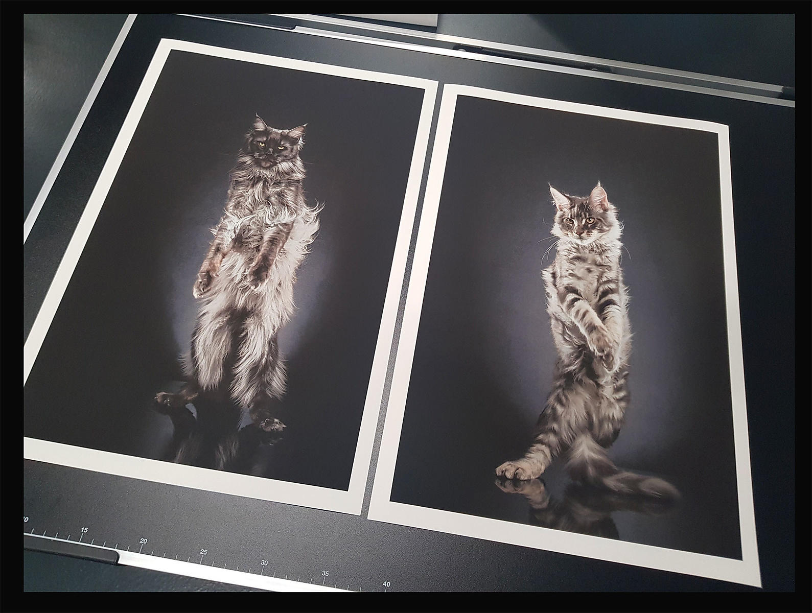 STANDING-CATS-ALEXISREYNAUD-limitedfineart