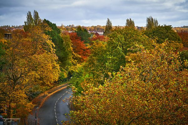 Autumn in Croxteth Drive