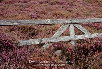 Image - Old wooden gate and heather, Scotland