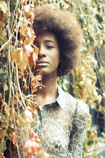 Beautiful Young Black Woman With Curly Hair And Smooth Skin Peering Through Ivy Plants