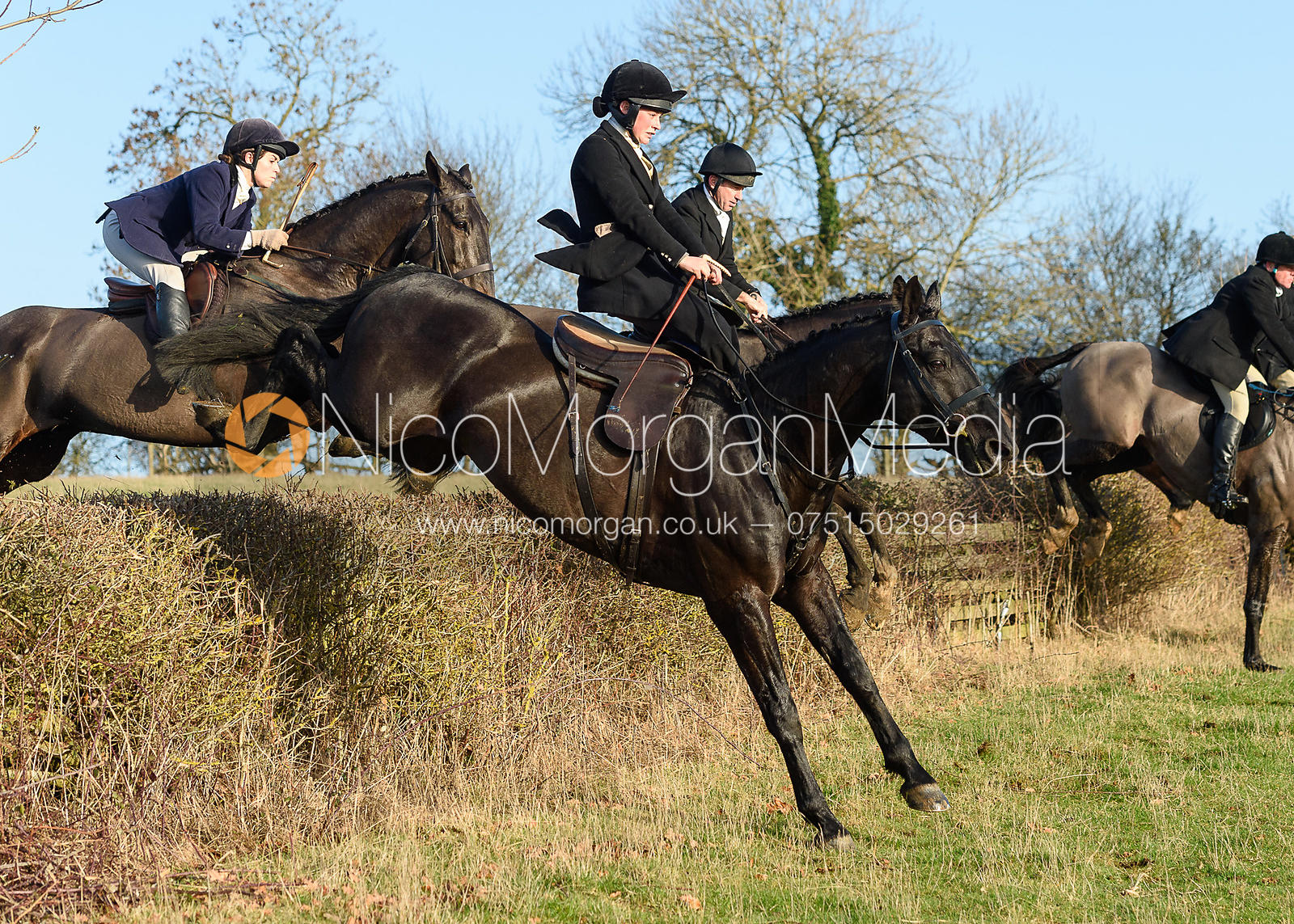 Sophie Walker Jumping a hedge in Knossington. The Cottesmore Hunt at Hill Top Farm 11/12