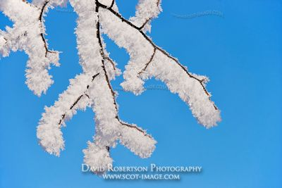 Image - Snow covered twigs and blue sky