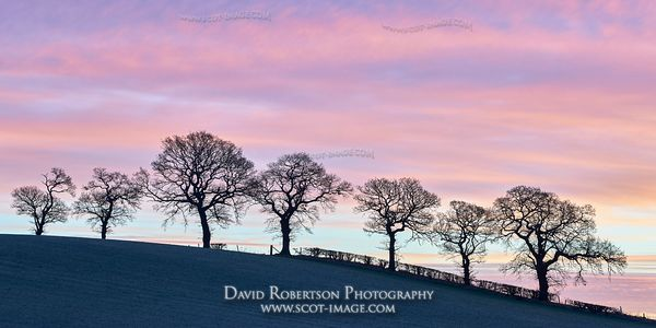 Image - Line of trees on hillside and a winters sunrise, Alloa, Clackmannanshire, Scotland. Panoramic.