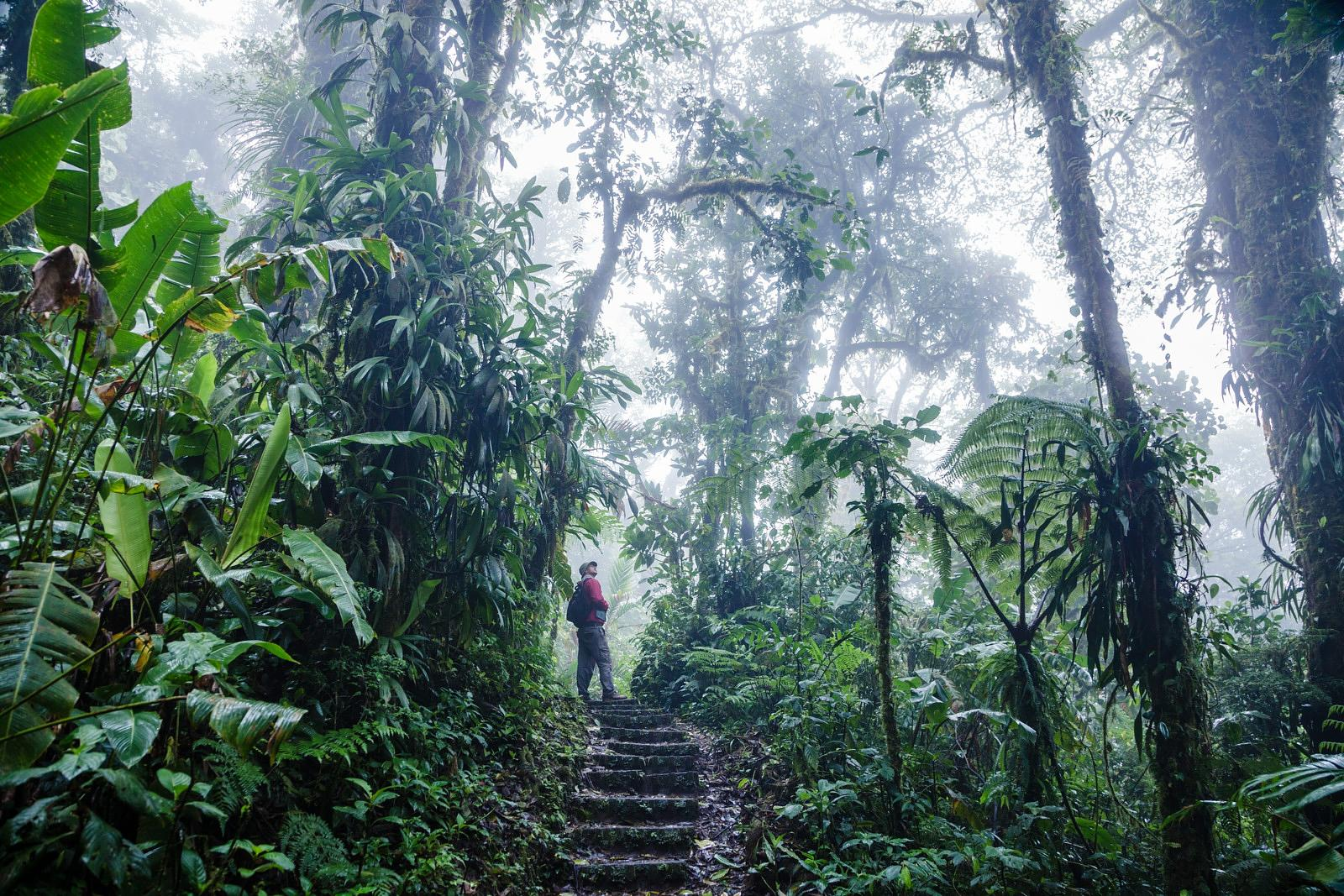 Man  walking in the Monteverde Cloud Forest, Costa Rica