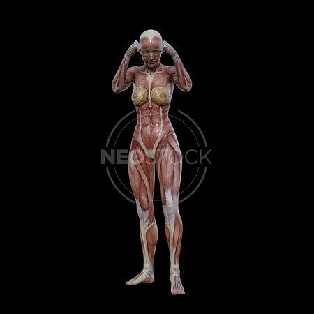 cg-body-pack-female-muscle-map-neostock-43