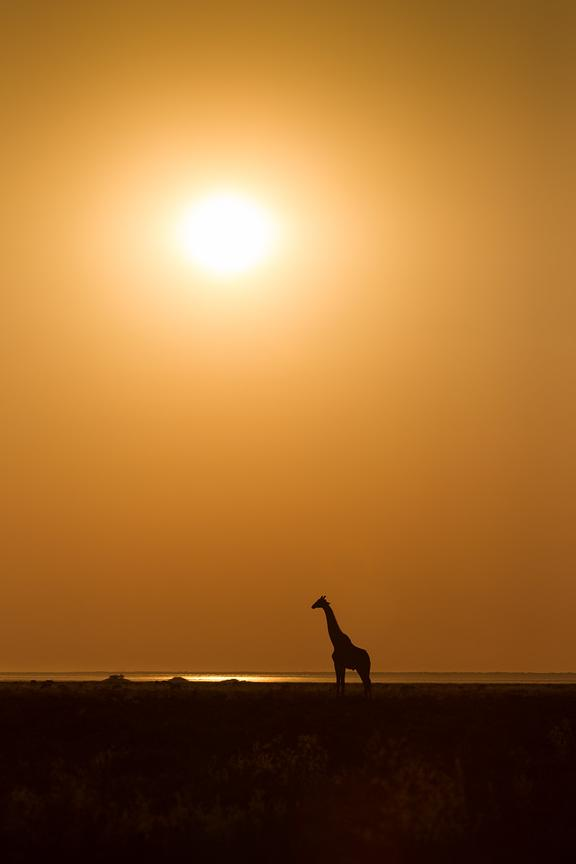 Silhouette of a giraffe in profile against orange sky and afternoon sun on the plains of Etosha National Park, Namibia.