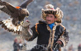 Kazakh eagle hunter with  Golden Eagle at Eagle Hunters Festival in Uglii in Altai Mountains western Mongolia