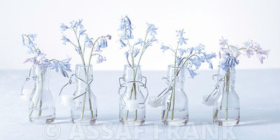 Bluebells in glass bottles