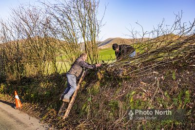 HOWGILL 50A - Hedge laying