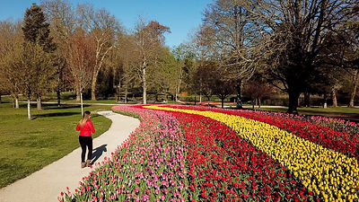 Tulipes-au-Chateau-de-Cheverny_Mir-Photos-ADT41_(21)