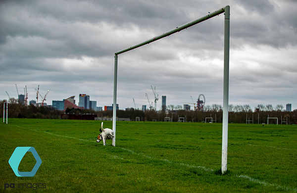 A dog taking a leak on goalposts at Hackney Marshes in London following Friday's announcement that the Premier League has sus...
