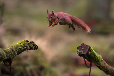 Squirrel_Airlines