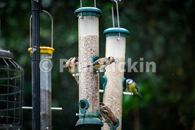 Variety of birds on bird feeders