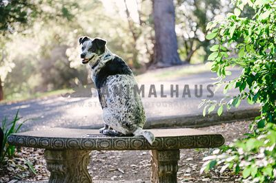 Dog sitting on a bench and looking over his shoulder