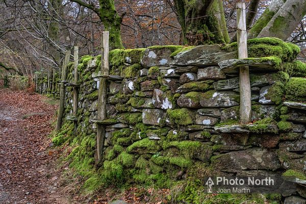 GRASMERE 08A - Dry stone wall, Deer Bolts Wood