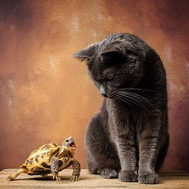 The Cat & The Tortoise
