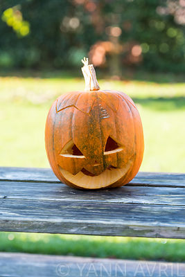 Halloween pumpkin on wooden table, in a garden-France, autumn