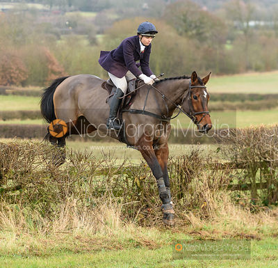 jumping a hedge at Barrowcliffe. The Quorn Hunt at Barrowcliffe 6/12