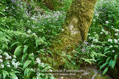 Image - Wild flowers and tree trunk, Dollar Glen, Clackmannanshire, Scotland