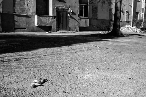 A dead rat in the courtyard (where also children play). There are supposed to be new apartment buildings with new tenants by ...