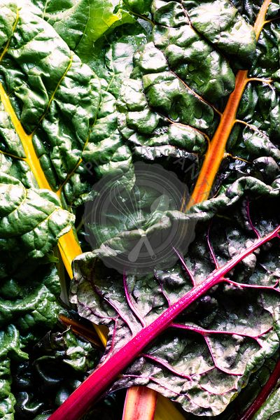 Leaves of rainbow swiss chard laid over one another.