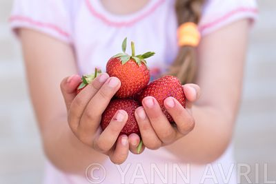 Fragaria- Harvest of strawberries  'Sonata' in the hands of a little girl ∞ Harvest of Strawberries 'Sonata' in the hands of ...