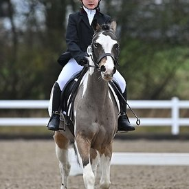 14/03/2020 - Class 2 - Unaffiliated dressage - Brook Farm training centre - UK