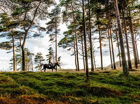 Woman riding horse in Thy, Denmark 9